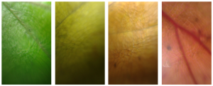 Autumn leave pallet as seen through PDMS drip lenses.